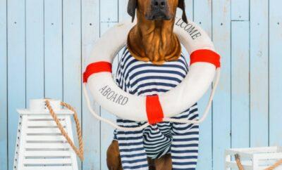Zvířecí miláčci jsou na lodi zakázáni